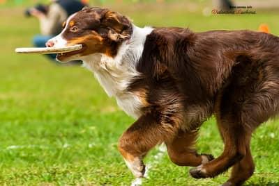 Дог фрисби: лучшая игра для людей и собак