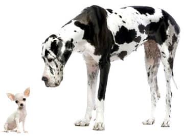 такие разные собаки,…