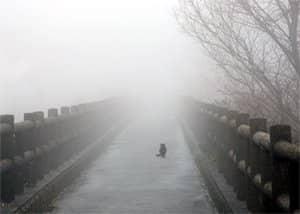Эвтаназия животных - нравственные проблемы