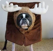 щенок дома