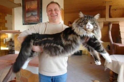 12-килограммовый кот