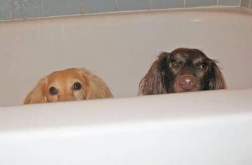 уход за собакой, купание такс