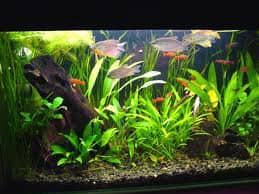 Обслуживание аквариумов спб