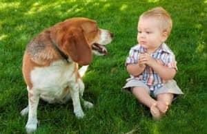 собаки разговаривают