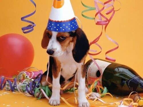 В Новый год собаки не любят только одно – запах алкоголя!