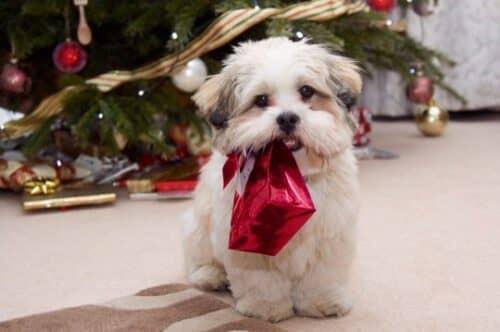 Подберите подарок для собаки по гороскопу