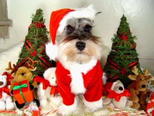 подарок собаке