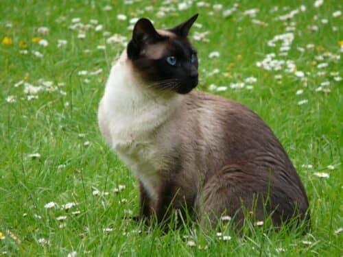 Кошачьи клички с учетом породы