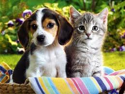 Выбрать домашнего любимца: кот или собака?