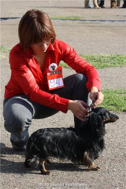 хендлер с собакой